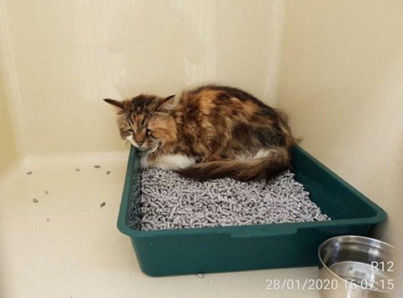 Забитая кошка с грустным взглядом прятала глаза от прохожих