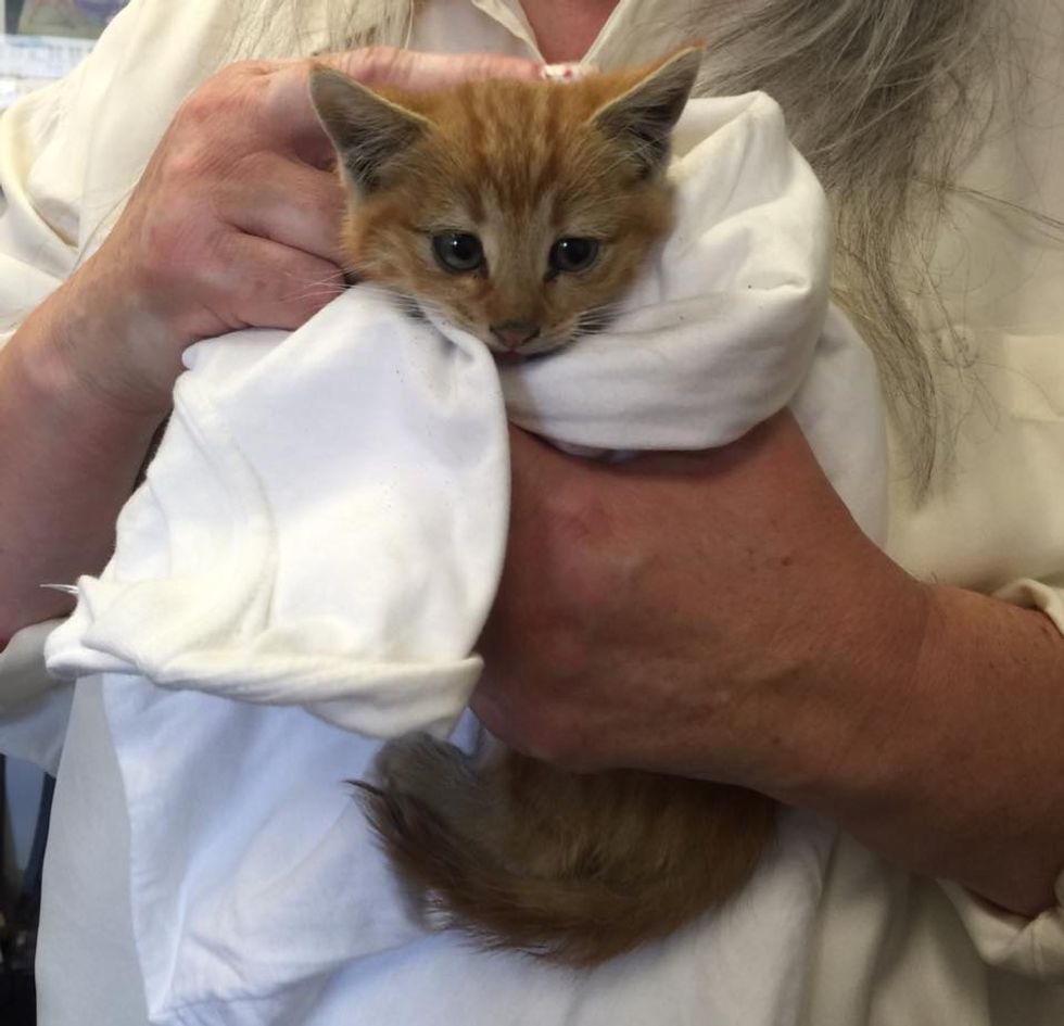 Couple Heard Tiny Chirps From Dumpster and Found Kitten Crying for Love -  Love Meow