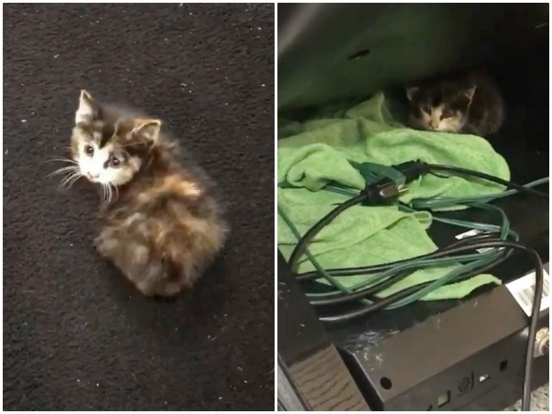 Перепуганный котенок забежал в автомойку, чтобы спрятаться от дождя