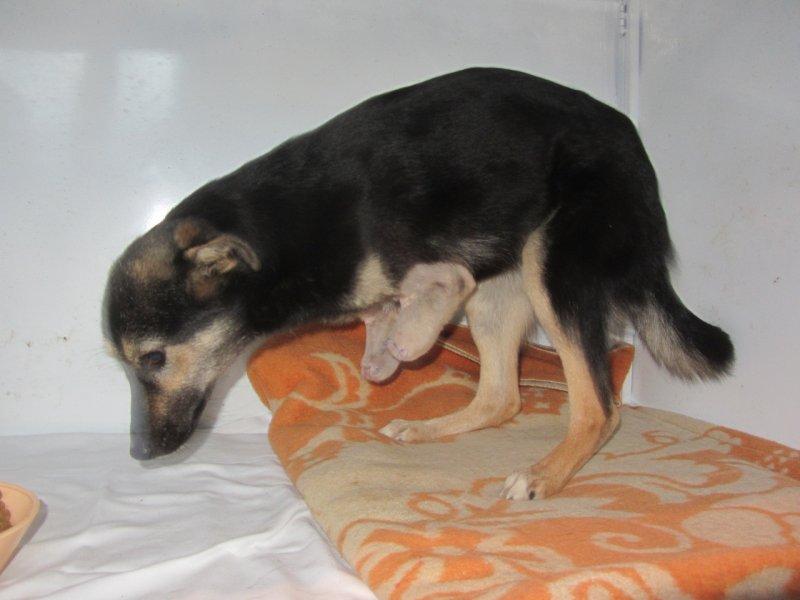 Собачка с перебитыми лапками приползла за помощью к детям