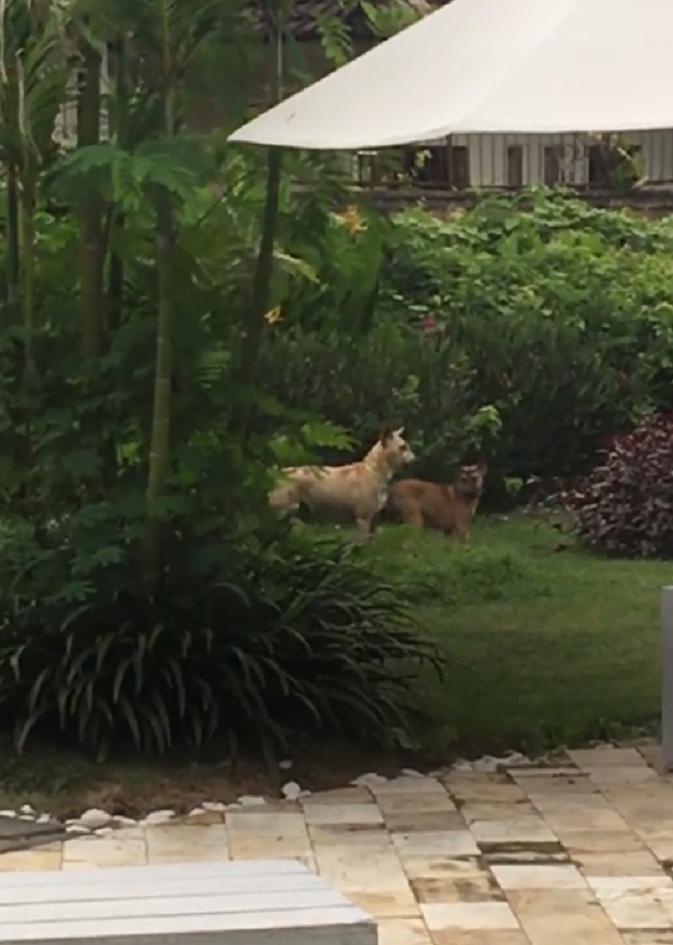 Лысая собака бродила возле храма, собирая объедки