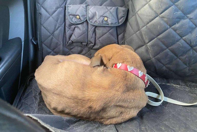 Забитый пёс дрожал при виде людей, боясь посмотреть в глаза