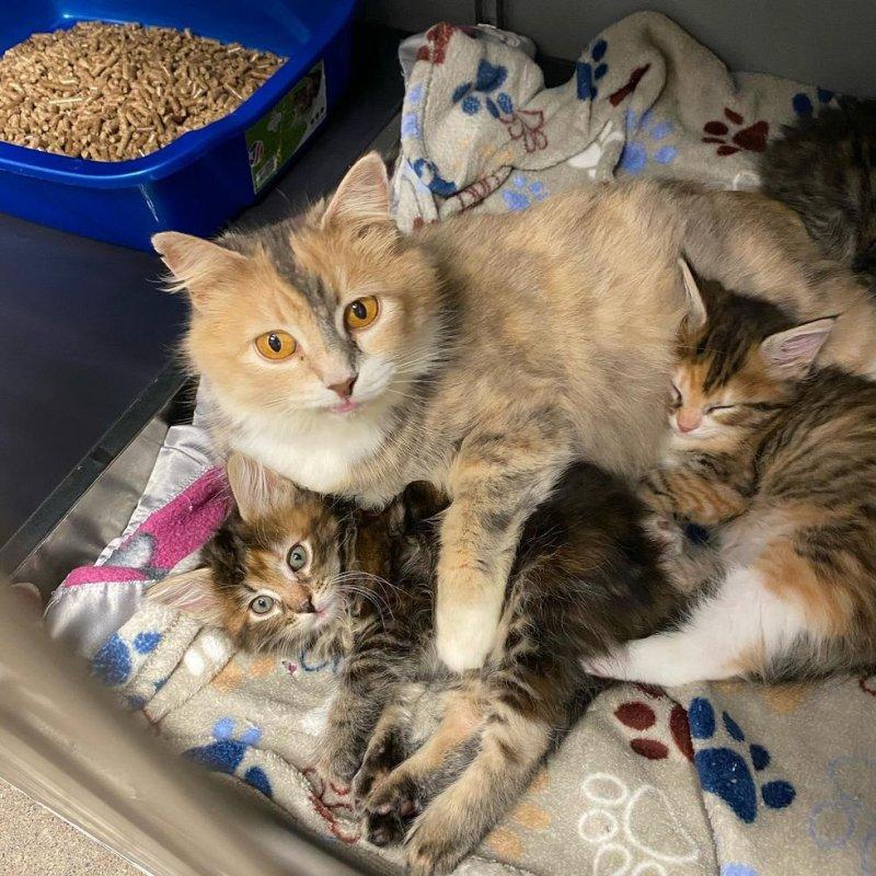 Мать-кошка с необычной мордочкой изо всех сил согревала своих котят